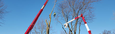 arbor care solutions tree service tree trimming