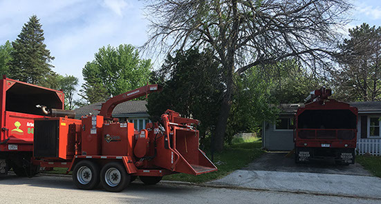 arbor care solutions residential tree care