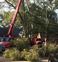 arbor care solutions tree removal
